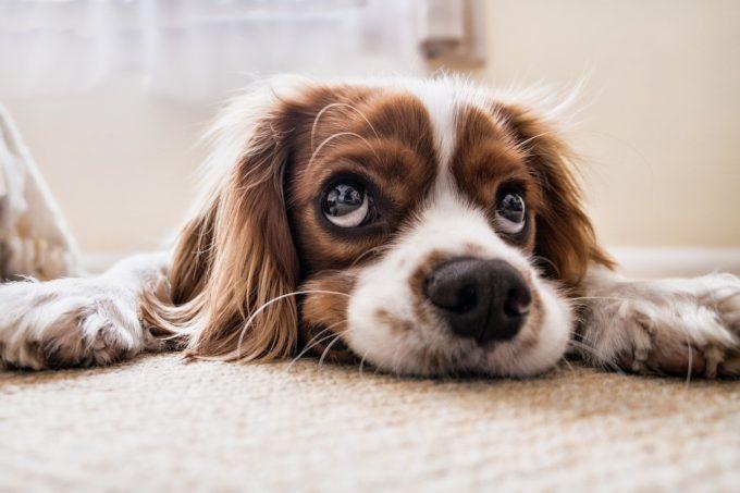 犬にスイカの皮や種はダメ!?身との違いやアレルギーなど注意点も