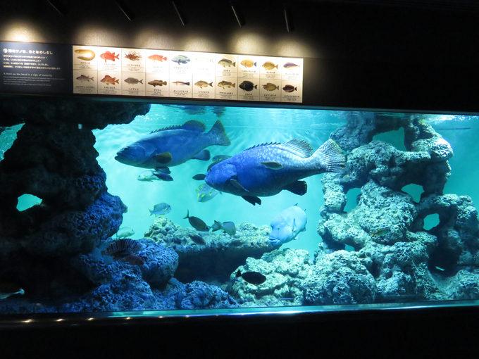 葛西臨海水族園の一番安くお得な割引券はこれ!
