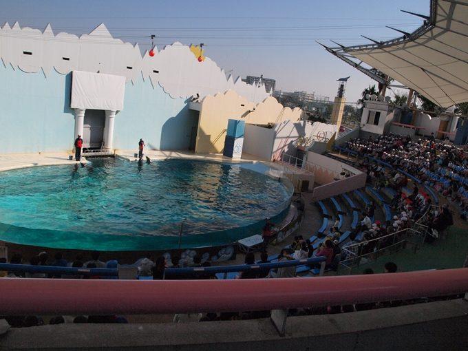 「須磨水族園のイルカショー」混雑状況をリアル写真で解説
