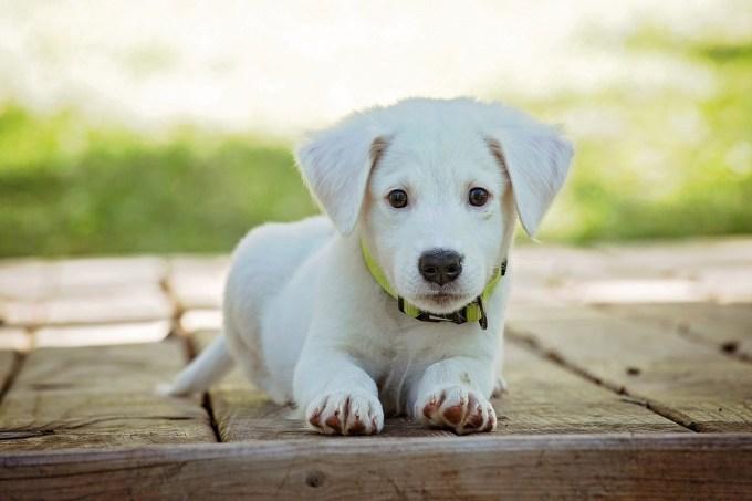 犬にスイカの皮や種を食べた時のアレルギーなど注意点