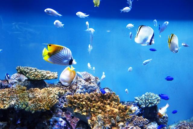 【2019最新】姫路水族館のお得な割引券まとめ!クーポンでお得に入場♪