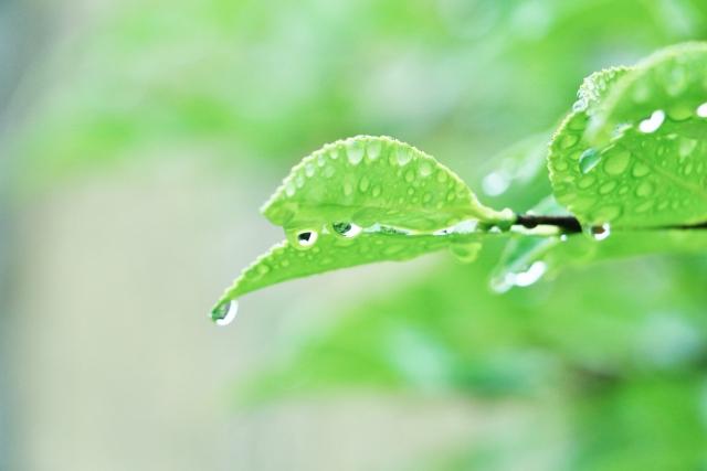 梅雨は日本だけですか?海外は?
