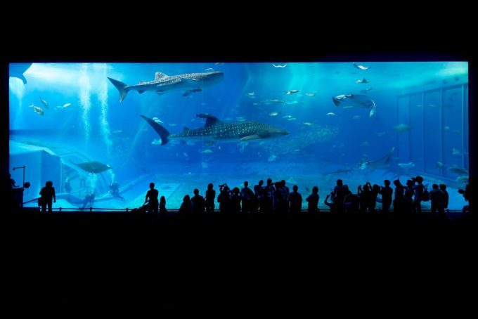 【2019最新】須磨水族館のお得な割引券まとめ!クーポンでお得に入場♪
