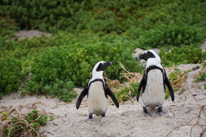 ペンギン水族館にお得に入れる方法とは?