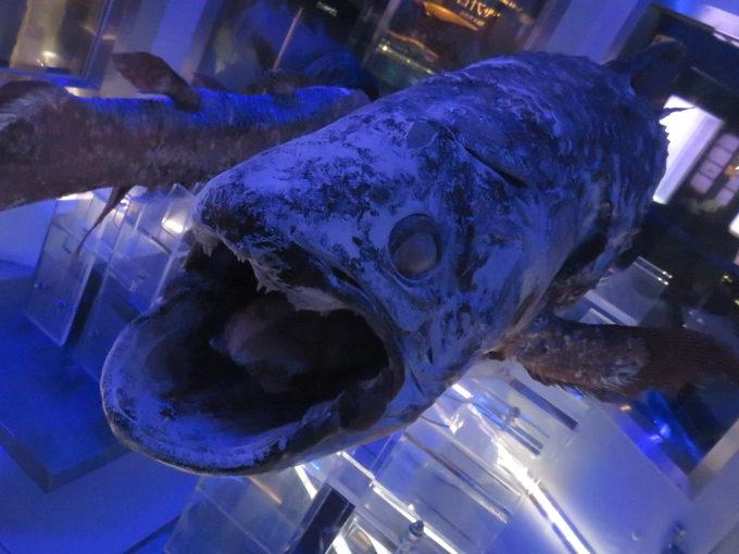 シーラカンスに会える!?深海生物の展示に特化した『沼津港深海水族館』