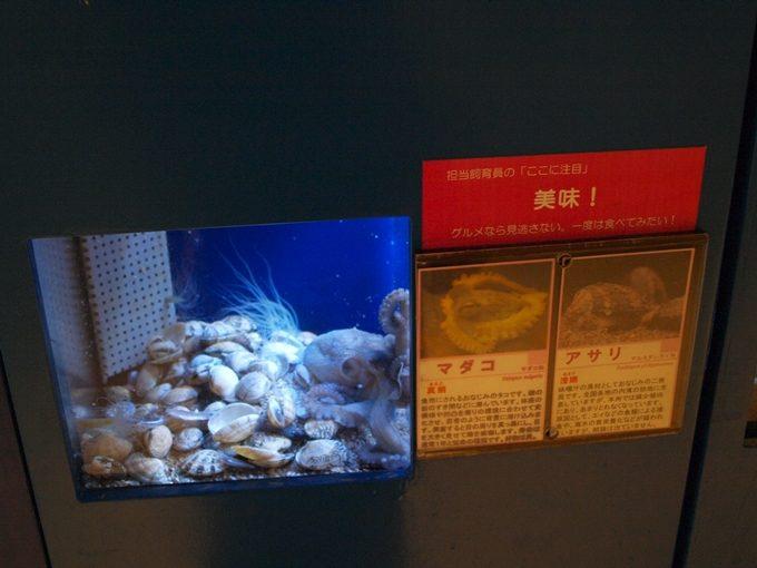 行くと思わず頭が良くなってしまう5つの水族館和歌山5