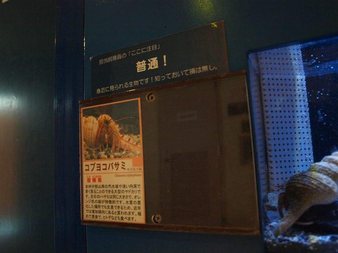 行くと思わず頭が良くなってしまう5つの水族館和歌山6