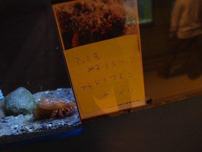 行くと思わず頭が良くなってしまう5つの水族館和歌山2