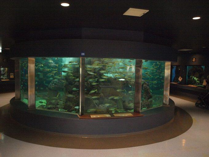 行くと思わず頭が良くなってしまう5つの水族館4