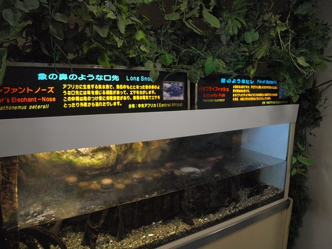 行くと思わず頭が良くなってしまう5つの水族館2