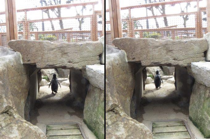 2016年にペンギン館屋外広場がリニューアル!スマスイこと須磨海浜水族園!2