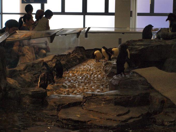 大阪デートの定番スポットで、ビジュアル系ペンギンと遭遇!海遊館!2