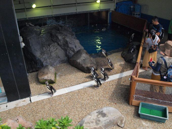 2016年にペンギン館屋外広場がリニューアル!スマスイこと須磨海浜水族園!1