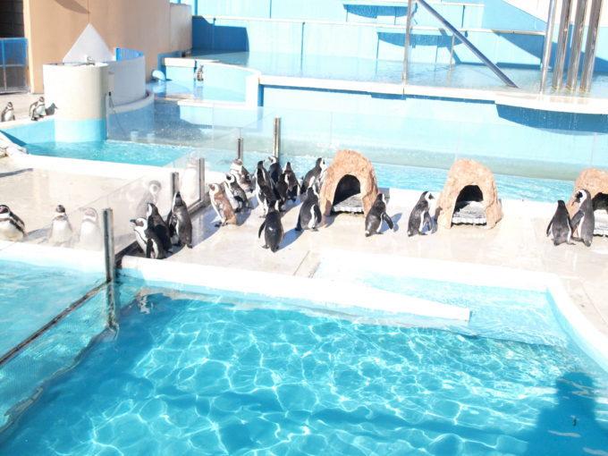 水族館のチケット売場のすぐ側でペンギン達がお出迎え、志摩マリンランド2