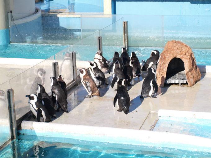 水族館のチケット売場のすぐ側でペンギン達がお出迎え、志摩マリンランド1