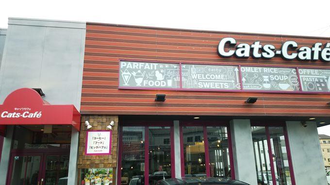 【スイーツおススメ】パフェの有名店ですが、名物はスイートポテト。キャッツカフェ1