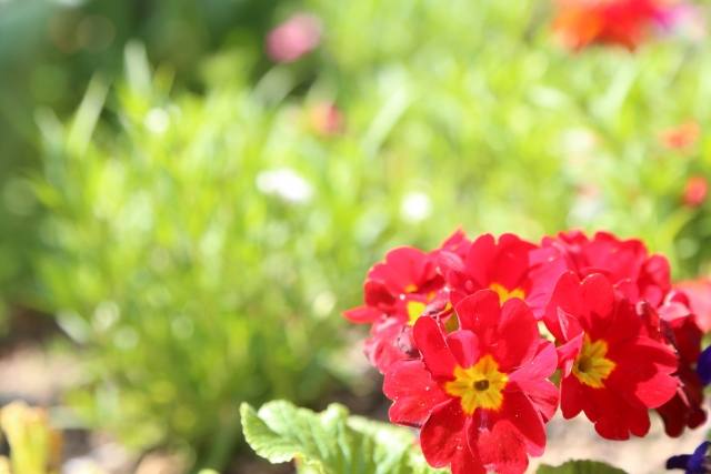 宿根草を季節に合わせる裏技