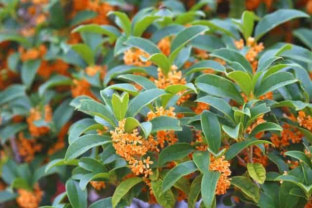 庭木って水やり不要なの?お手入れ簡単な庭木や長期留守の対処法
