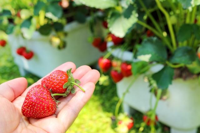 小さいプランターでも育つ秋植え野菜はコレ