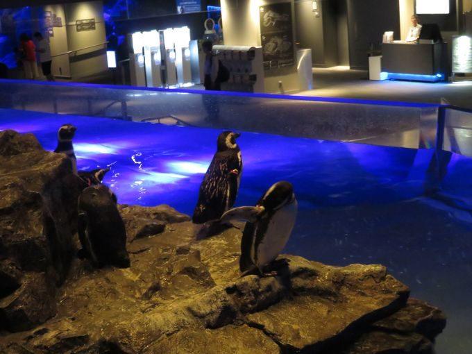夜に訪れるメリット。ペンギンカフェで優雅なひとときを!3
