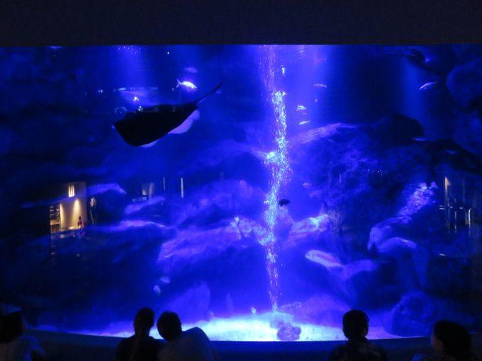 ペンギン以外にも魅力的なすみだ水族館の生き物たち5