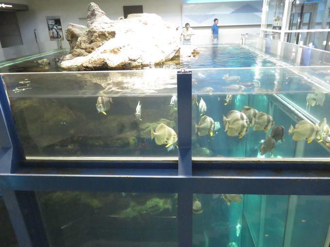 日本一の水槽はここにあった!? 海遊館より深い12m級の縦長水槽!!4