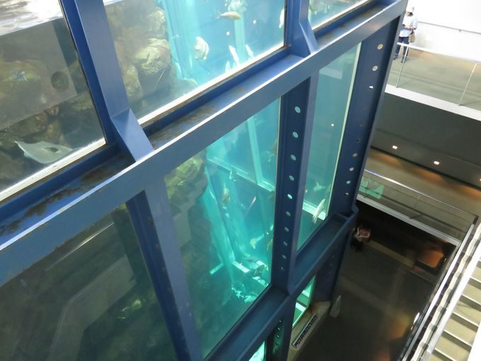 日本一の水槽はここにあった!? 海遊館より深い12m級の縦長水槽!!2