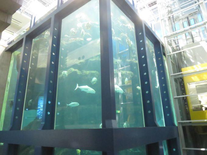日本一の水槽はここにあった!? 海遊館より深い12mの水槽!!1