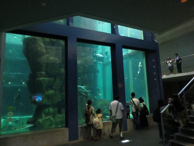 日本一の水槽はここにあった!? 海遊館より深い12m級の縦長水槽!!3
