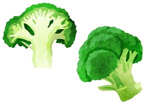 毎日食べた方がいい食べ物『ブロッコリー』