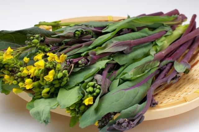 紅菜苔(コウサイタイ)の栽培方法!タネの蒔き方や育て方、収穫方法、害虫