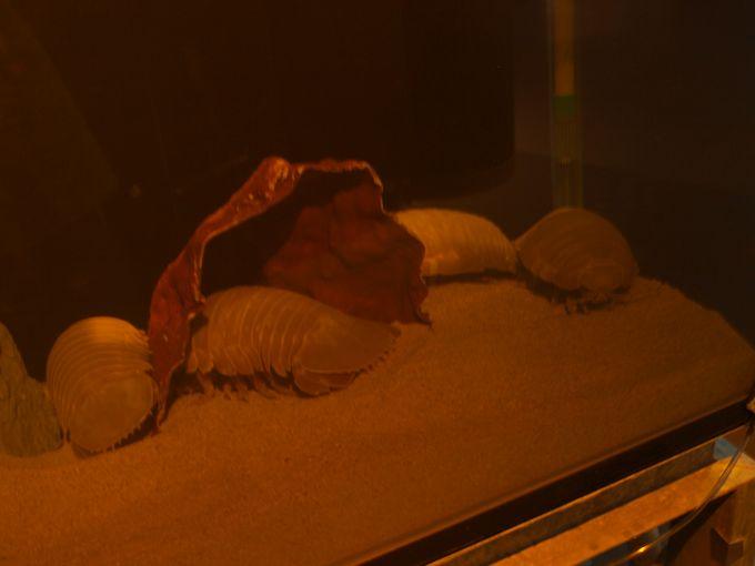 ネットの口コミで一躍有名に、鳥羽水族館のダイオウグソクムシ水槽!3