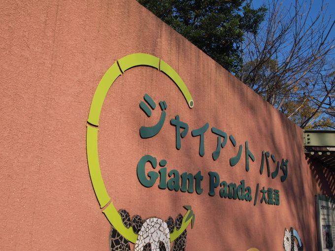 【上野動物園】シャンシャン行列は何時から?パンダ舎攻略の為の3つのポイント!