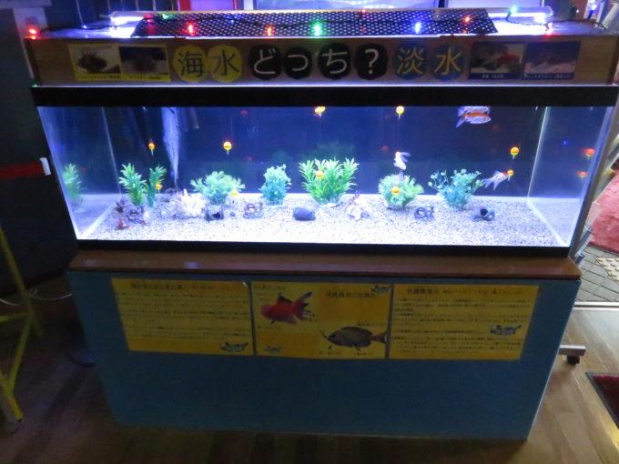 水族館好き必見!ウォットの好適環境水の水槽とふれあい水槽!2