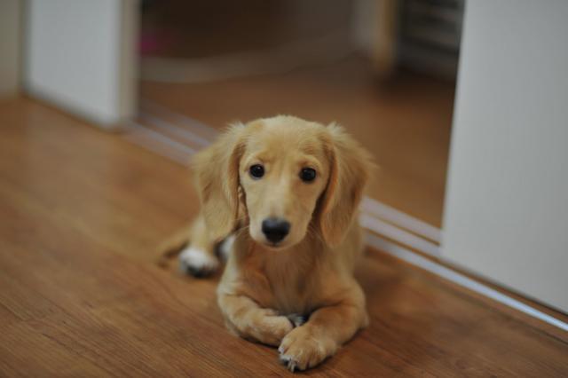犬の乾燥肌用保湿スプレーおすすめ人気ランキング!散歩の前後に愛犬に♪